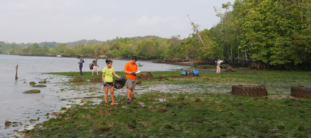 Teams of 2 combing and clearing litter from Surau beach