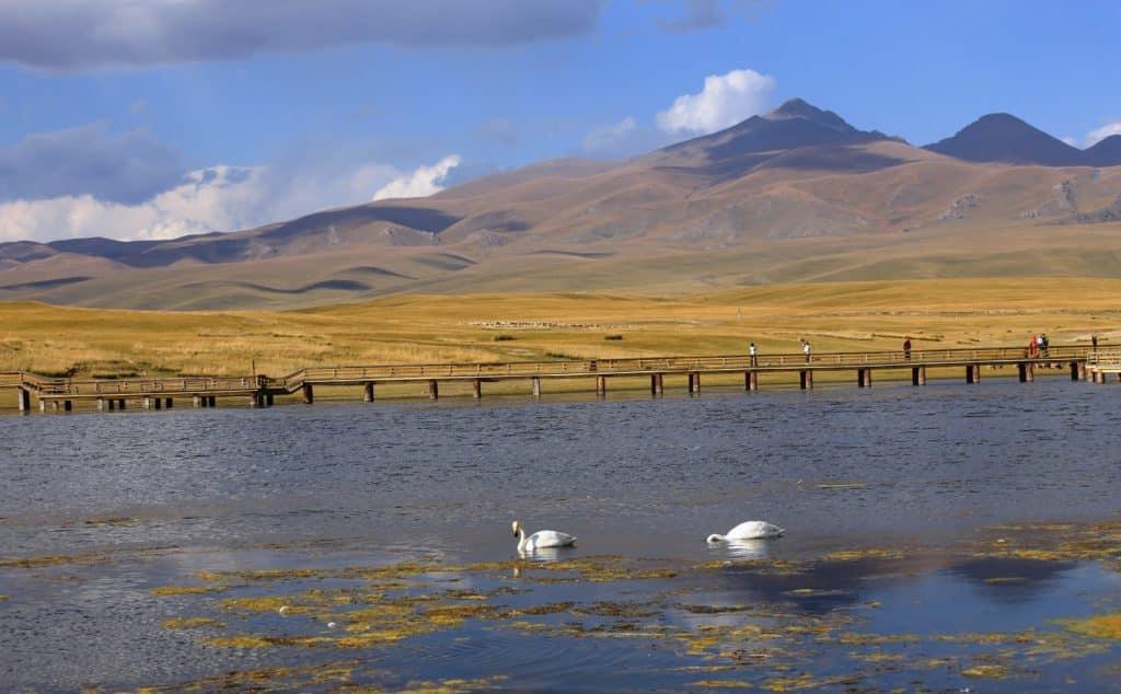 Bayinbuluke Swan Lake