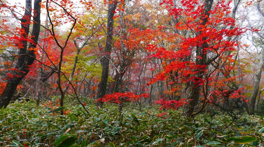 autumn-leaves-hallasan