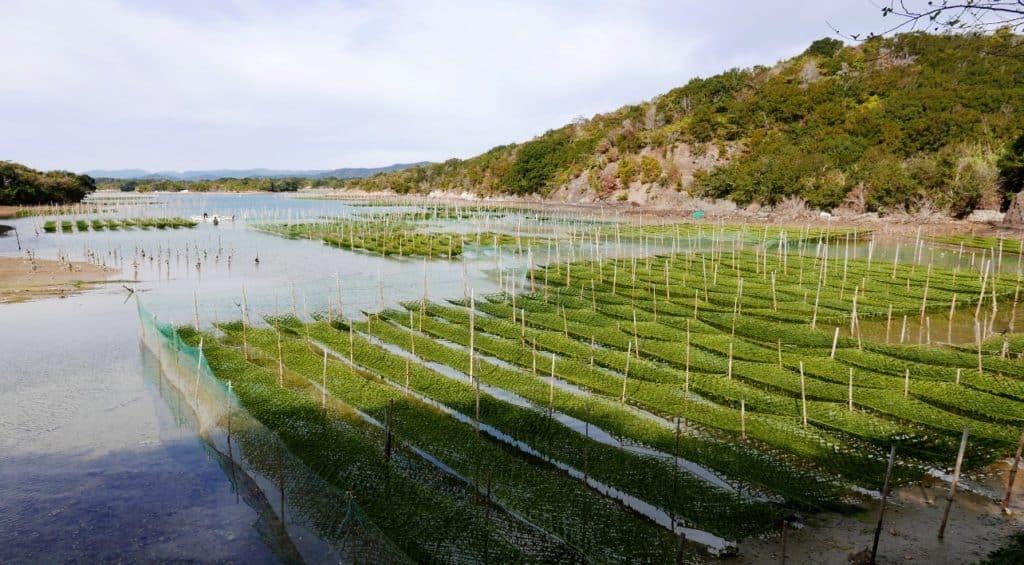 Seaweed Farm - Hotel Kintetsu Aquavilla