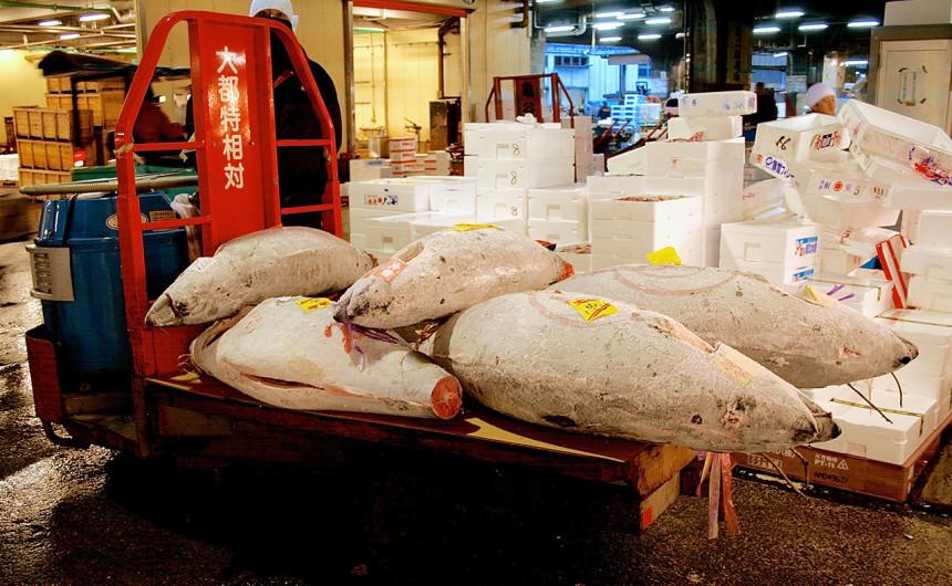 Logs of tuna