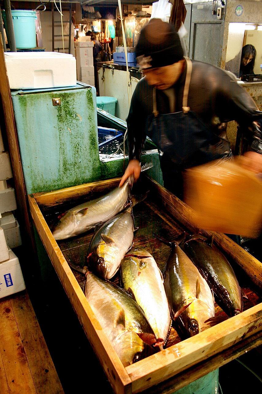 The Tsukiji Fish Market Tuna Auction Experience